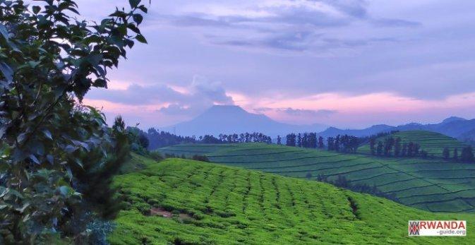 route du thé rwanda